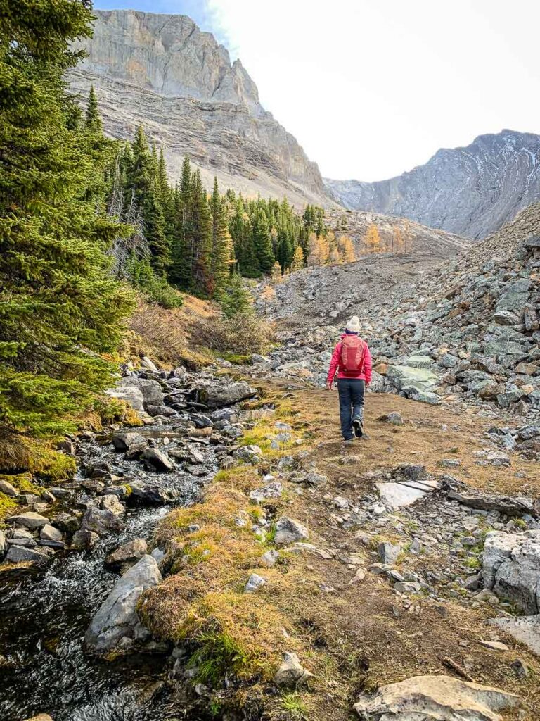 The Arethusa Cirque hike features mountain streams, larch trees and rugged mountain peaks