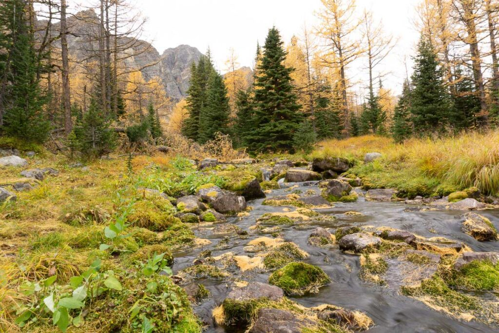 Meadow past Taylor Lake - best Larch hikes in Banff