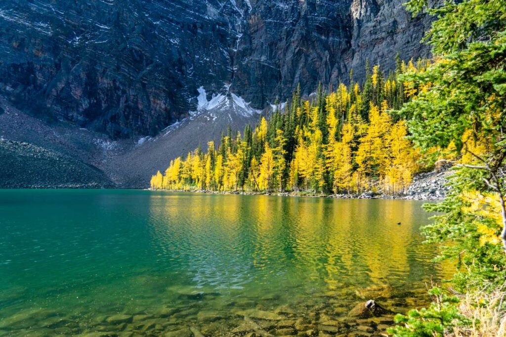 Arnica Lake with golden larches - best Banff Larch hikes