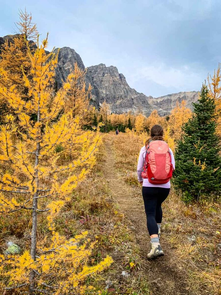 walking through golden larches in meadow just past Taylor Lake in Banff National Park