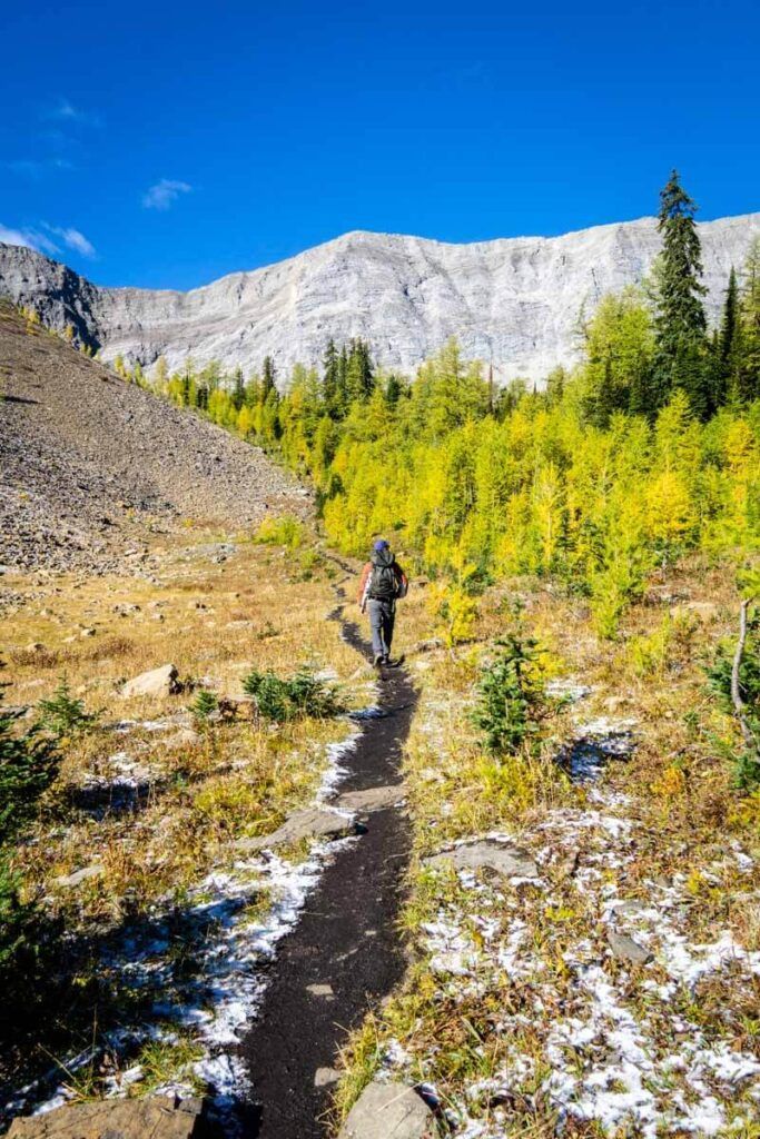 best larch hikes near Calgary