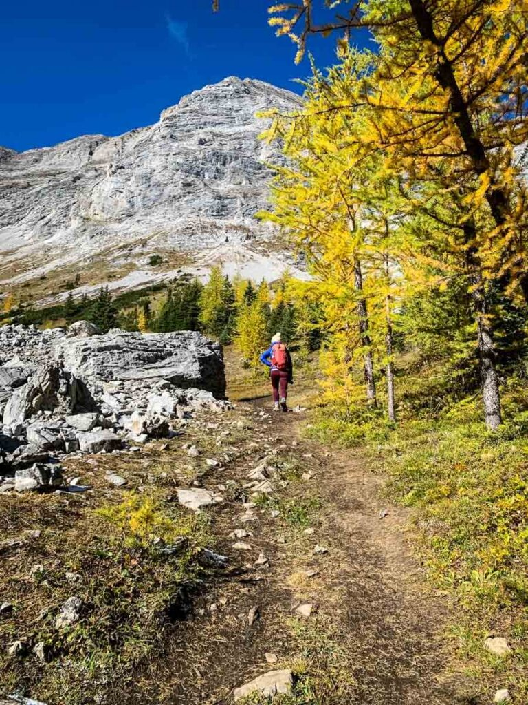 excellent larch hikes near calgary