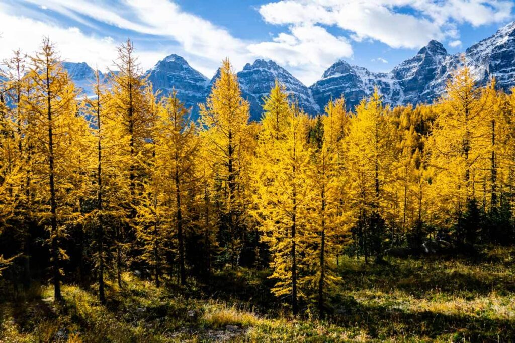 Larch Valley Sentinel Pass Hike in Banff