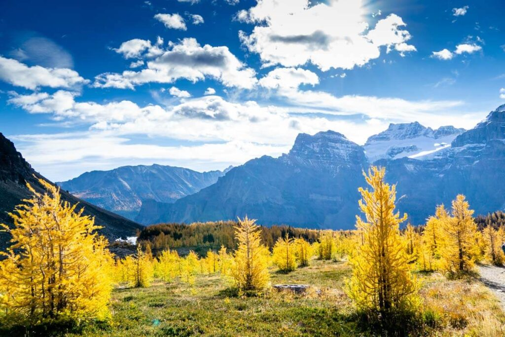 Golden Larches along Sentinel Pass Hike