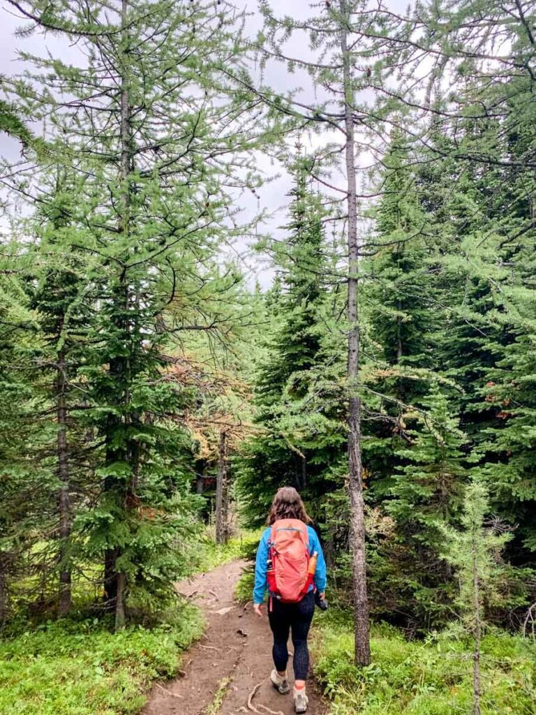 Walking amongst still green larch trees on Ptarmigan Cirque trail - Kananaskis best larch hikes