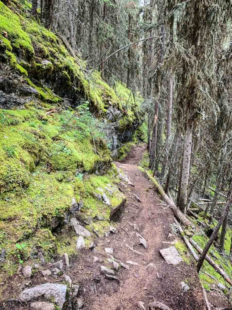 Moss covered rockwall on Stoney Lookout Hike in Banff
