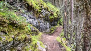 mossy rockwall along Stoney Lookout hiking trail in Banff