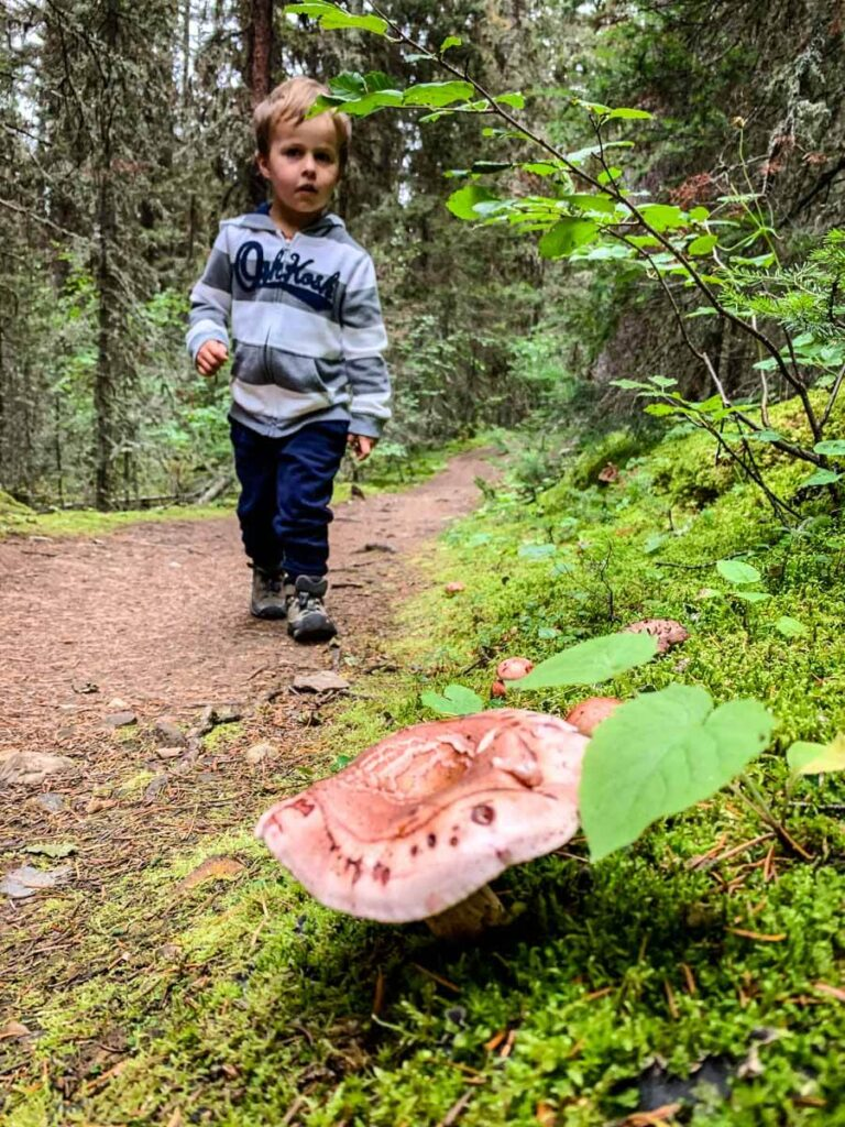 child on hiking trail with a close up of a mushroom - Stoney Lookout hike in Banff
