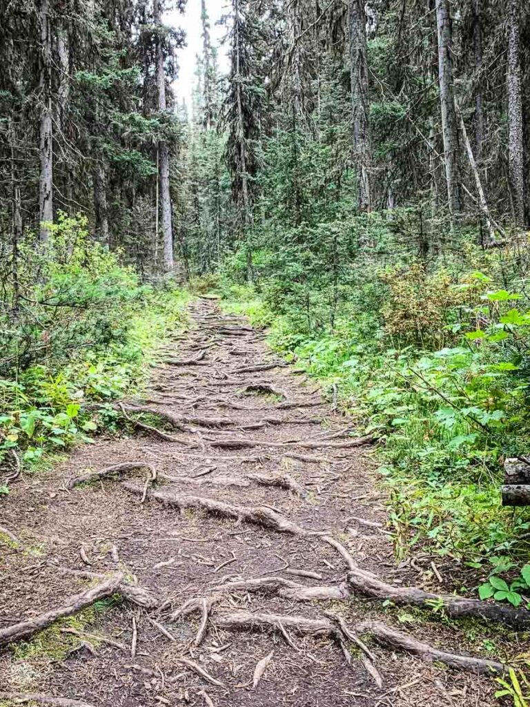 Stoney Lookout hiking trail covered in roots