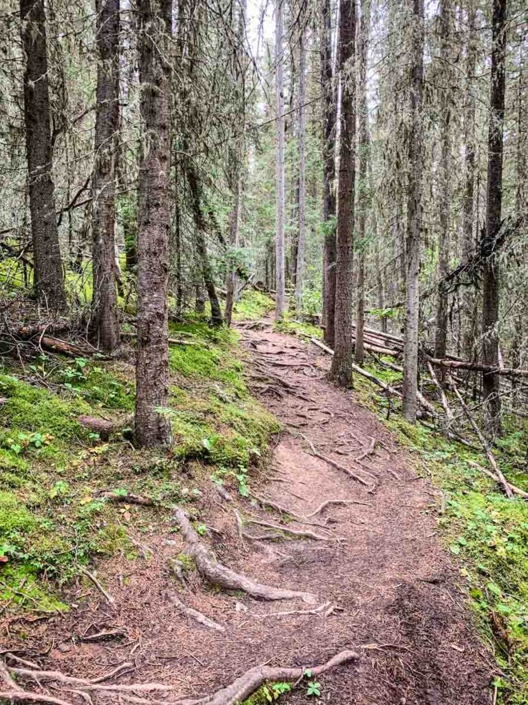 Stoney Lookout hiking trail in Banff